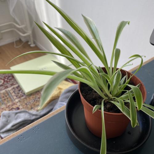Dan ik ook maar een foto van mijn plant. #plantleven #thuiswerken